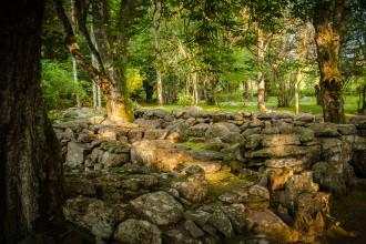 Arboretum 7