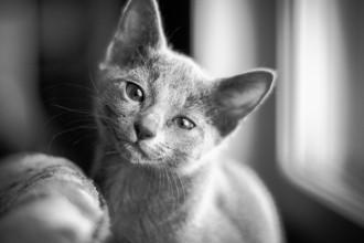 Kitty B